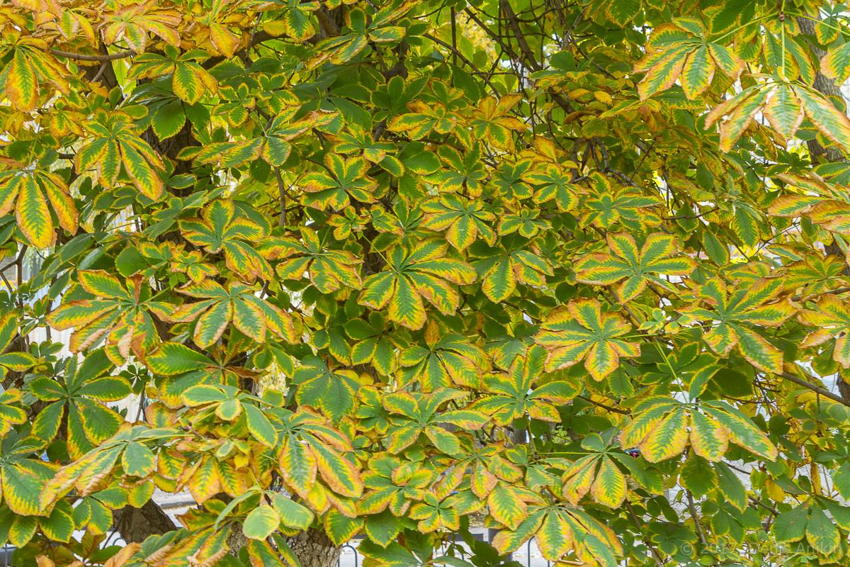 Саратов 2 садовая осень фото 10