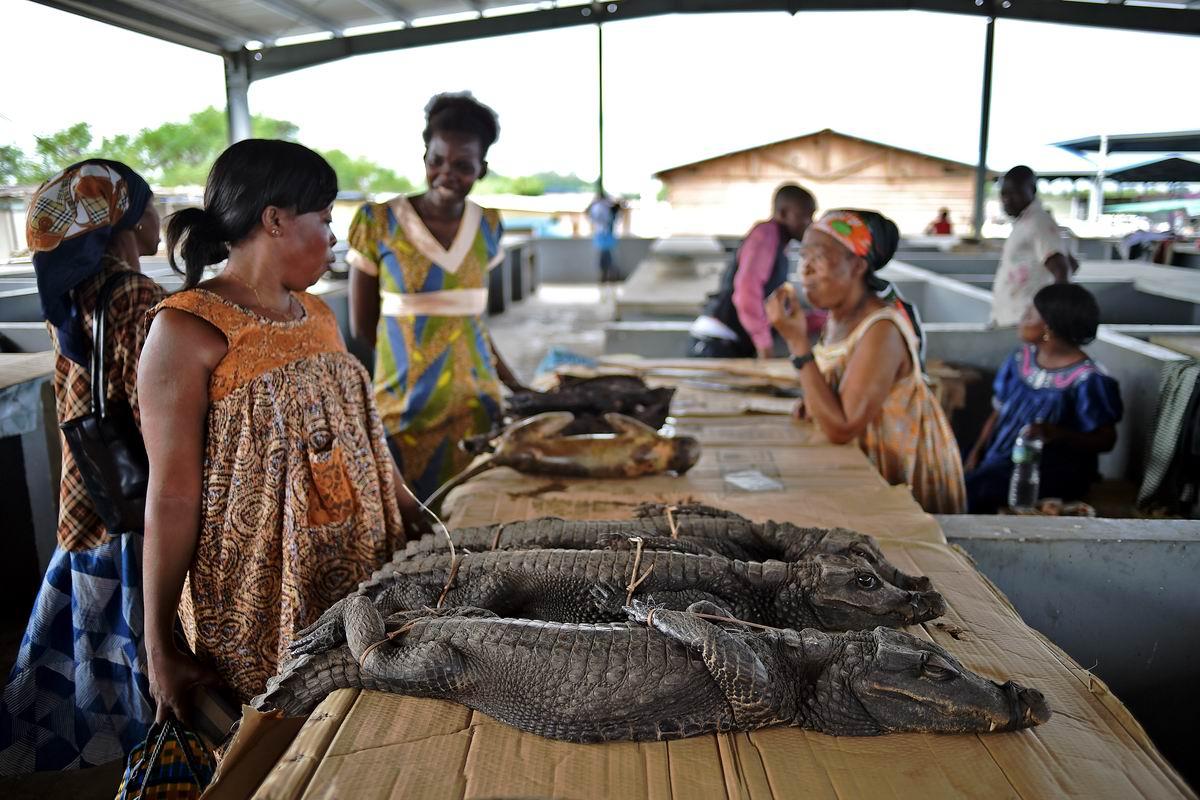 В гвинейских мясных рядах: А не хотите ли прикупить для жаркого свежепойманного крокодильчика