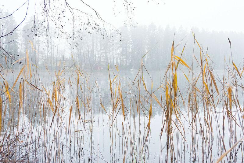 осень, туман, озеро