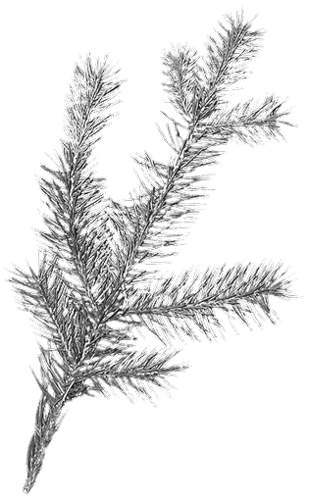 SAT_White Winter_Pin Branche_Scrap and Tubes.png
