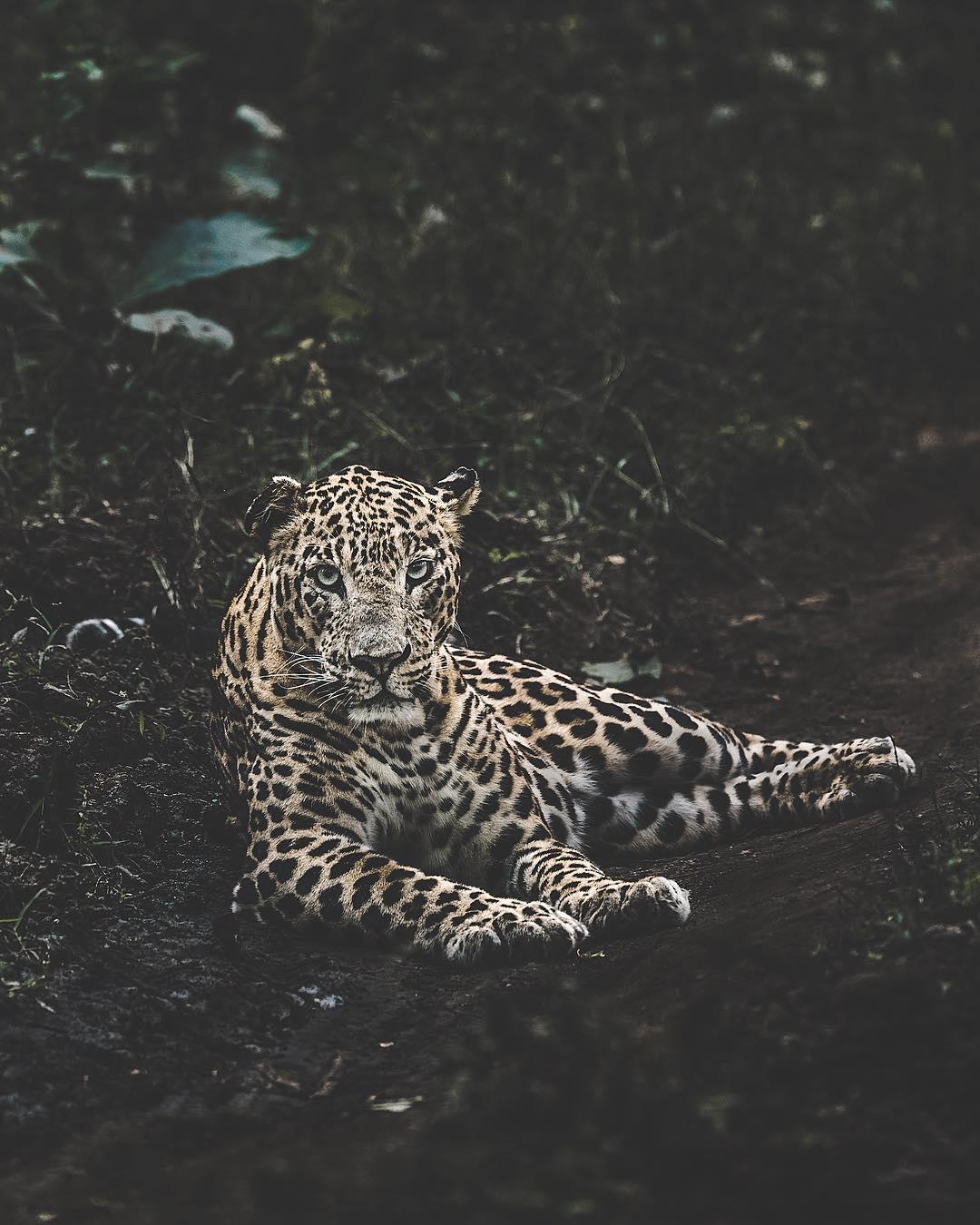 Природа и животные на снимках Донала Джеймса Бойда
