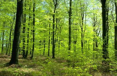 Власти Рязани планируют сделать вокруг города зеленый пояс