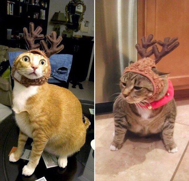 0 17d279 7841160c XL - Новогоднее настроение у домашних животных