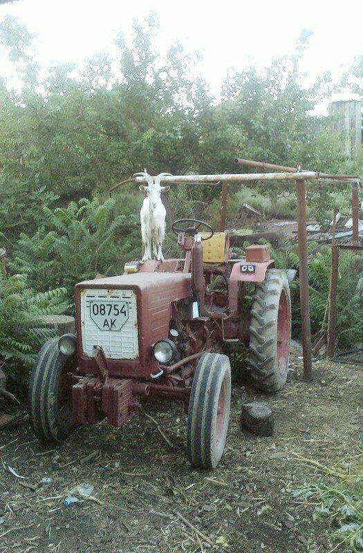 0 17dab7 78e430ba XL - Менуэт Советскому трактору