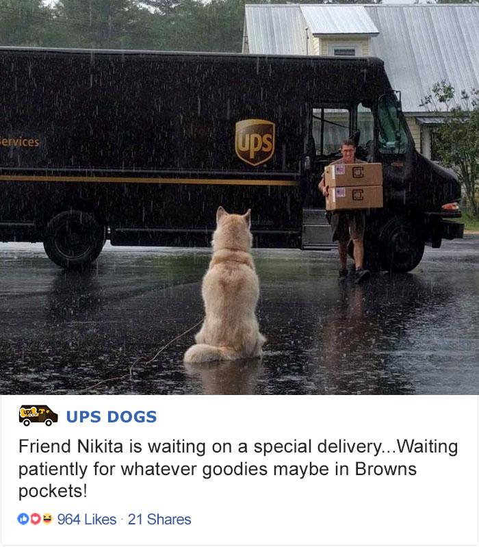 Ждет свою специальную доставку.