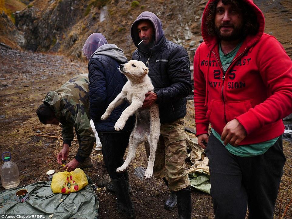 Кроме пастухов, у Чаппла был еще один компаньон — трехмесячный щенок Георгик. От щенка отказалась ма