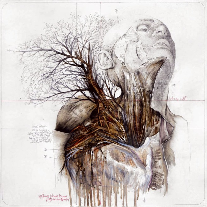 Beautiful Anatomical Illustrations by Nunzio Paci