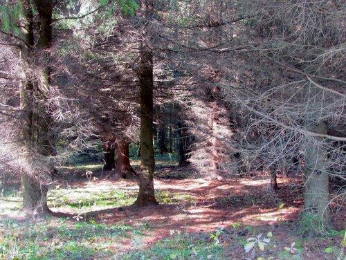 Свет в Берендеевом лесу