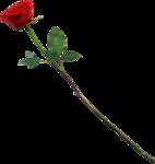 Beautiful Roses #7 (11).png
