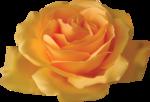 Beautiful Roses #7 (16).png