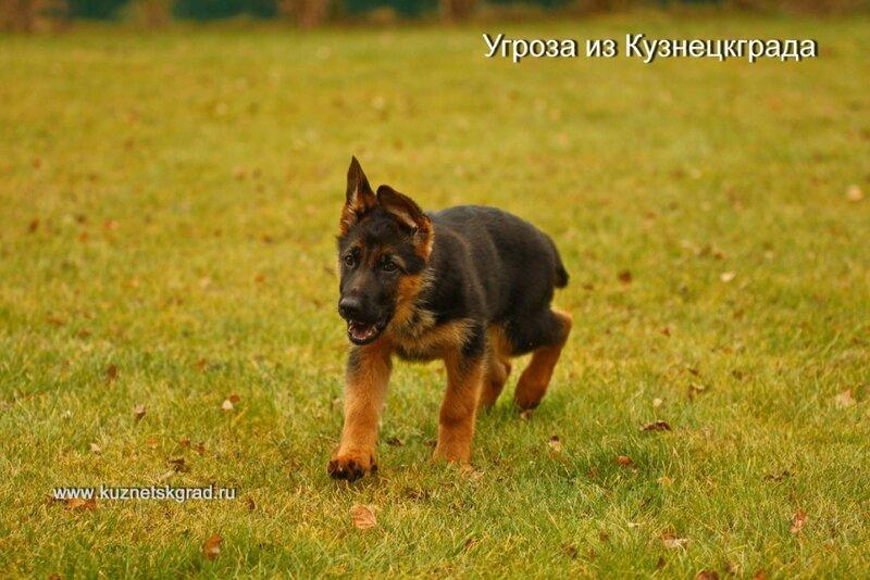 https://img-fotki.yandex.ru/get/896238/23658768.8/0_cef3e_b79e1d9b_XL.jpg