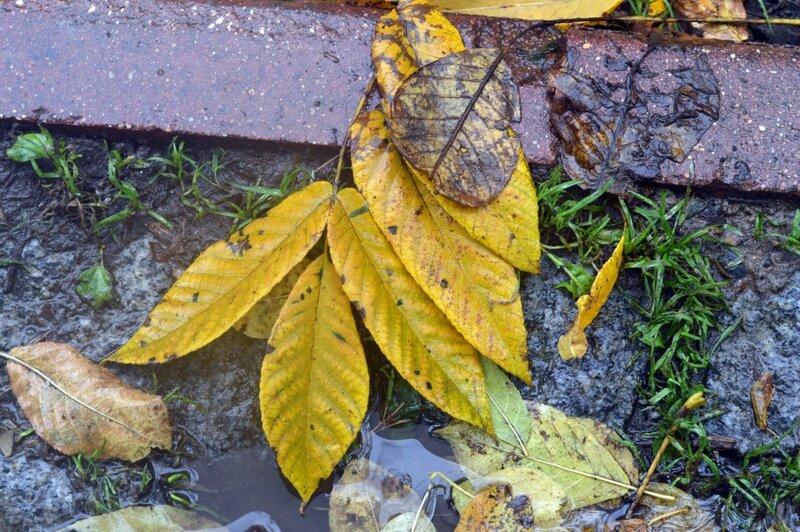 осенние листья под дождем