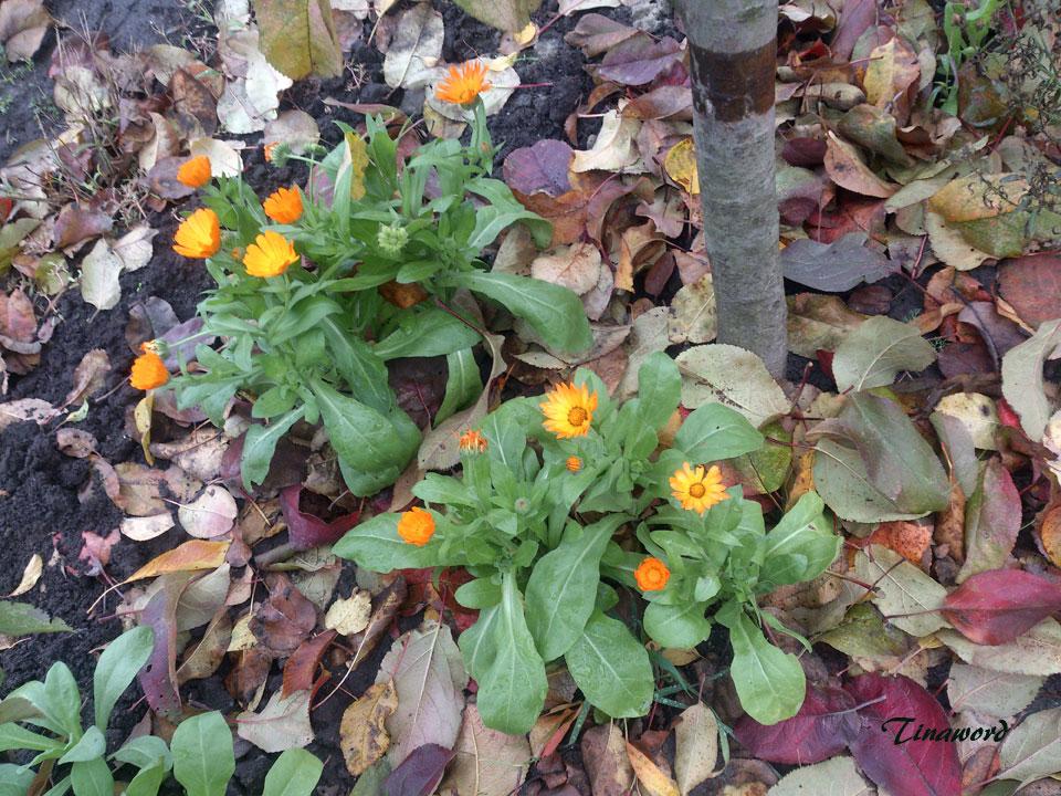 цветы-осени-48.jpg
