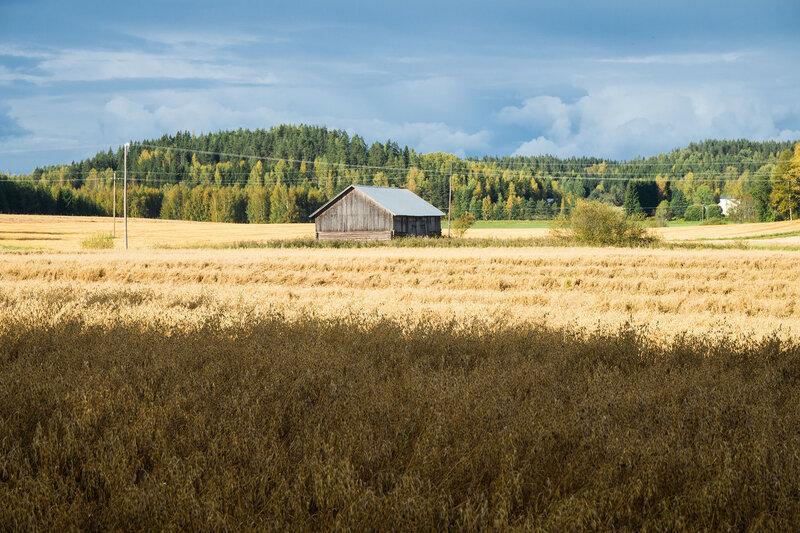 поле и сарай в финляндии в сентябре