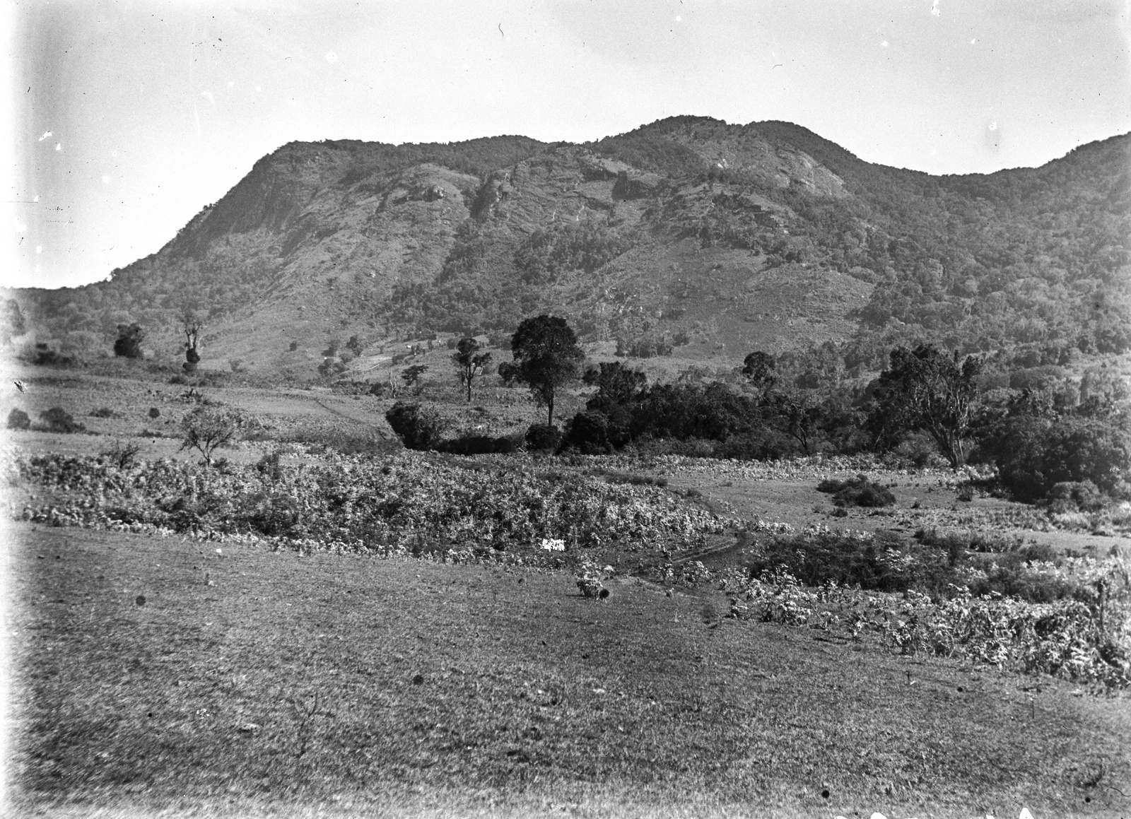 106. Магамба