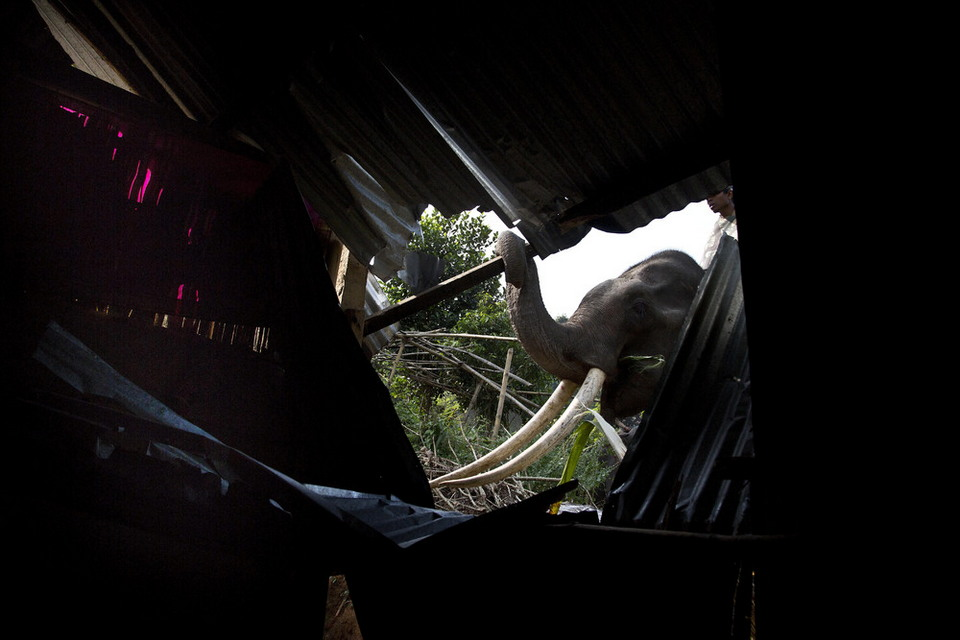 Индийские полицейские сносят незаконные постройки с помощью слонов
