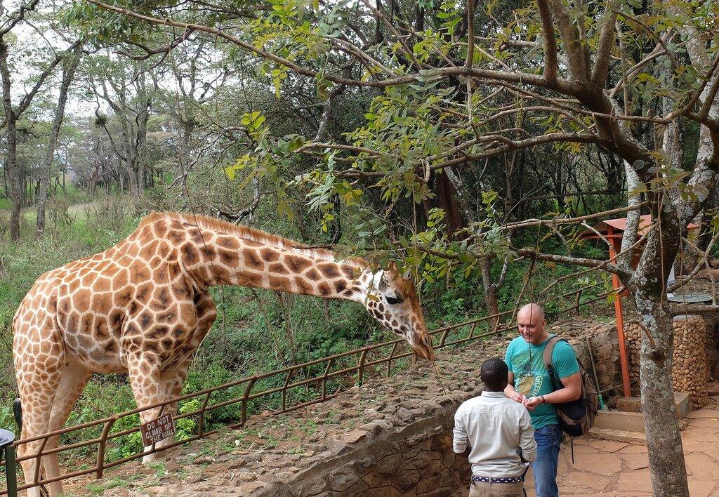Жирафы гей