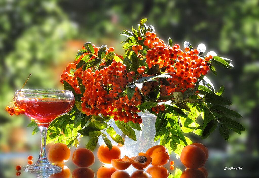 И пусть напиток осени — не мед…