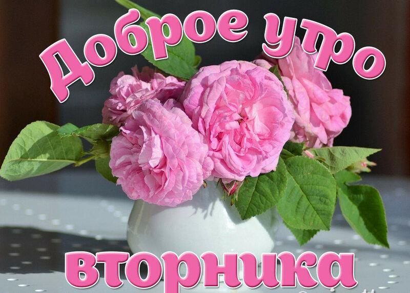 Открытки отличного вторника цветы