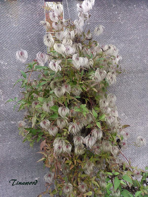 цветы-осени-57.jpg