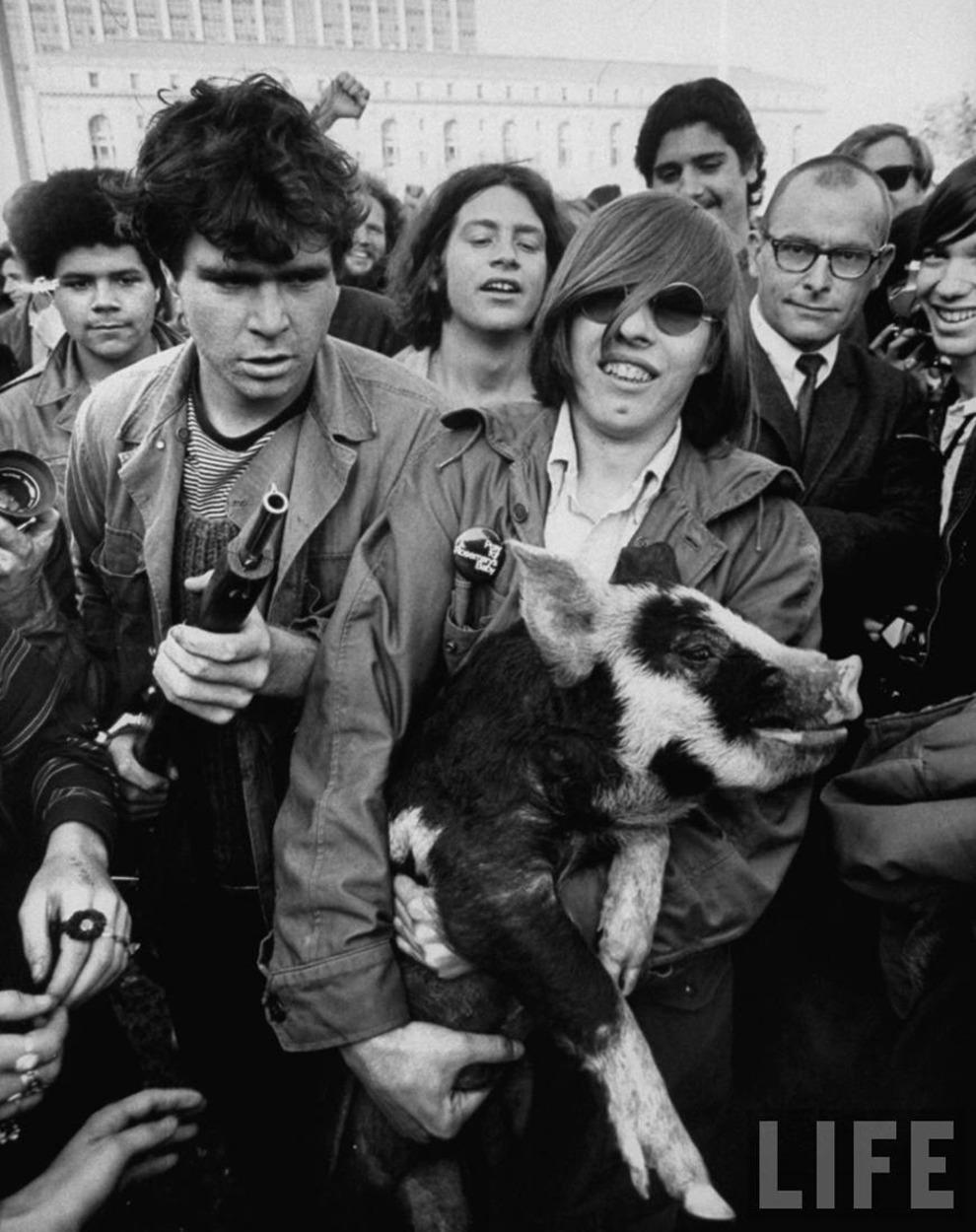 1968. Хиппи со свиньей. Сан-Франциско