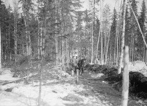 1919. Запряженные сани, на лесной тропе. Надвоицы