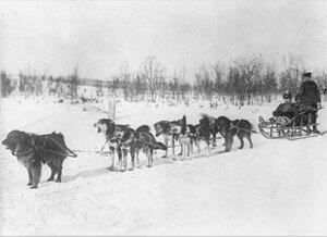 1919. Собачья упряжка, Мурманск
