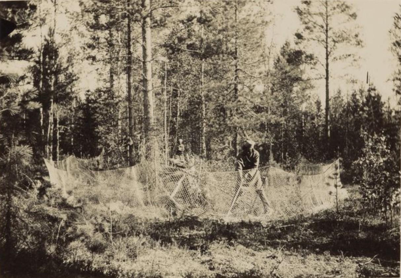 Сеть для ловли