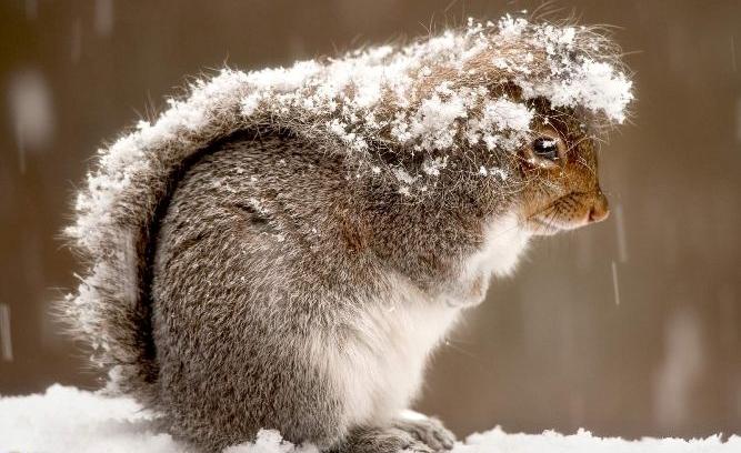 первый снег-белка-1.jpg