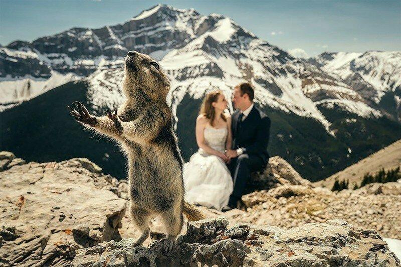 0 17af1c 9bd6bdec XL - Курьезные свадебные фотографии с участием животных