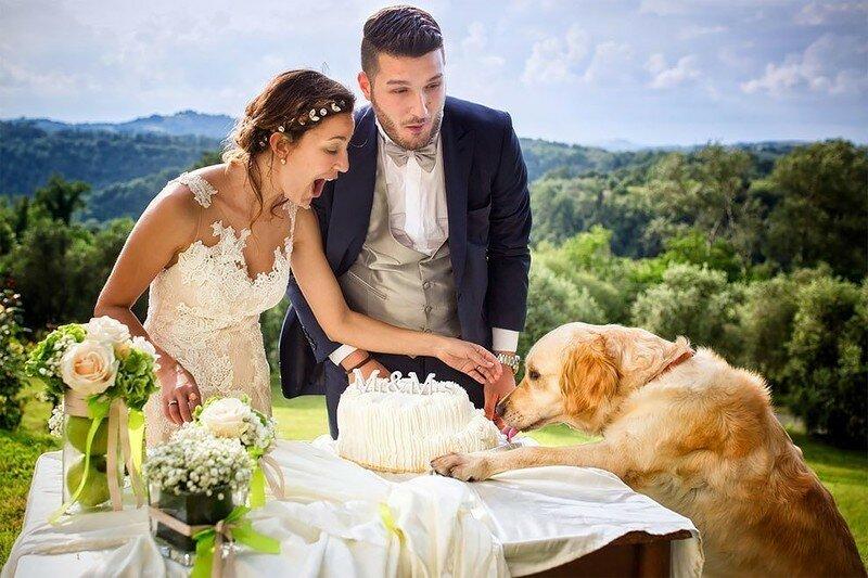 0 17af20 27519d67 XL - Курьезные свадебные фотографии с участием животных
