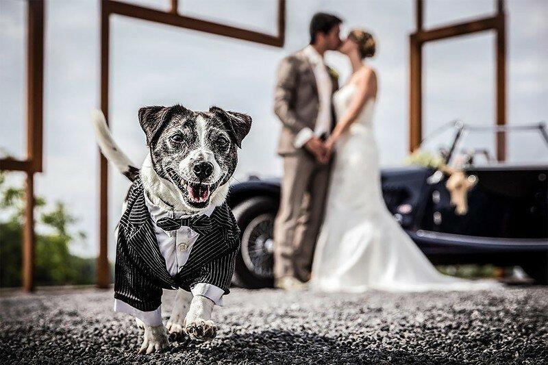 0 17af23 304aa651 XL - Курьезные свадебные фотографии с участием животных