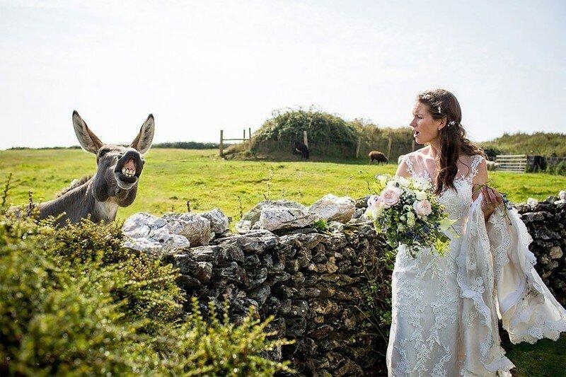 0 17af24 ed729eea XL - Курьезные свадебные фотографии с участием животных