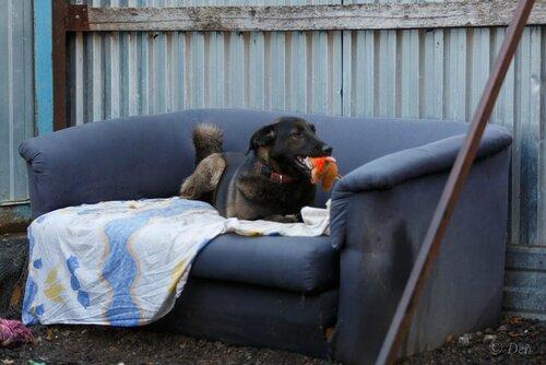 Брауни собака из приюта догпорт фото