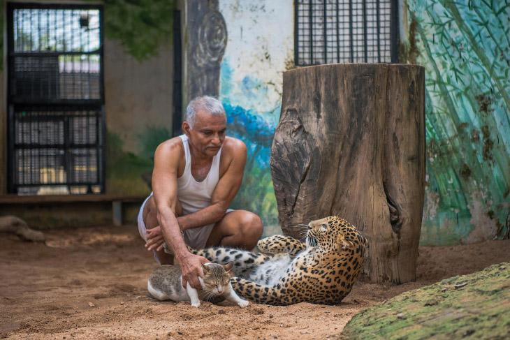 Это место называют «Ковчег» — детский приют для диких животных, чьих родителей убили по разным причи