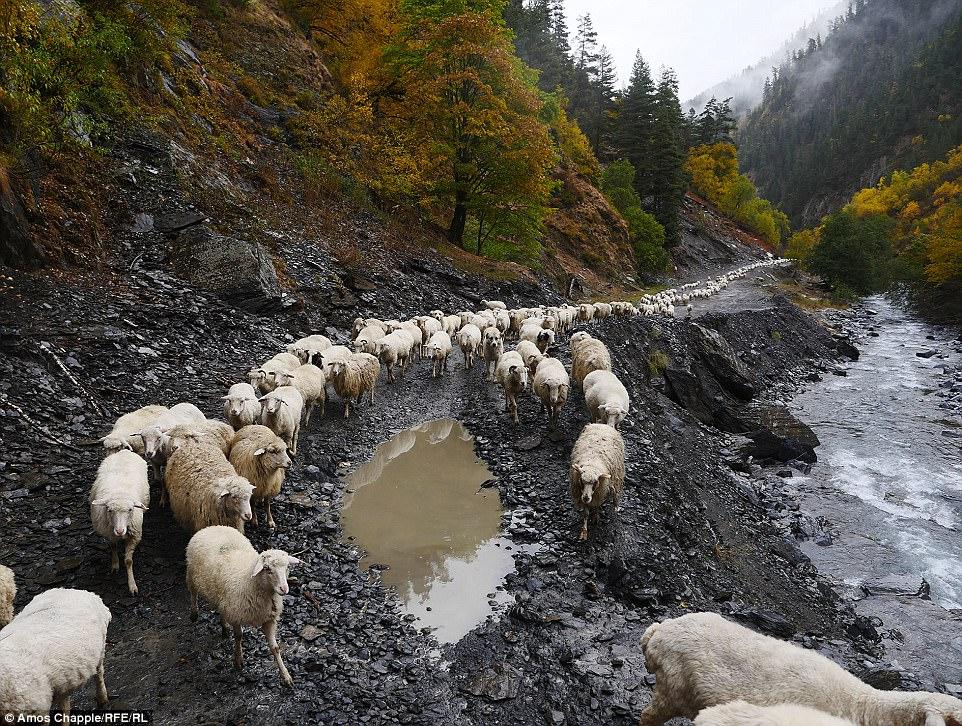 На опасных тропах овец нужно было фотографировать очень осторожно, чтобы не напугать.