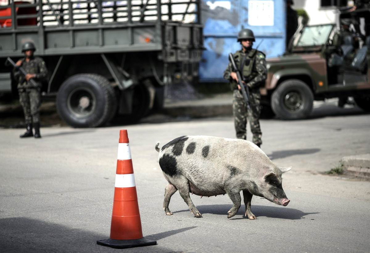 А плевать я на вас всех хотела!: Свинья и полицейские в фавелах Рио-де-Жанейро