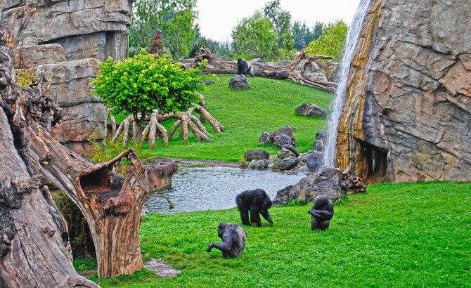 Биопарк Валенсии. Испания