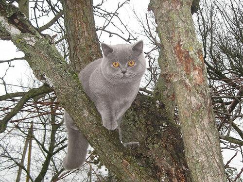 Кот Петя