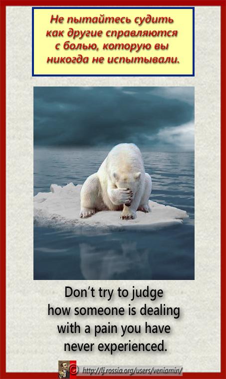 Не пытайтесь судить как другие справляются с болью, которую вы никогда не испытывали(красная рамка, плакатка, медведь)