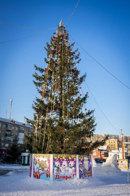 Новогодние елки Златоуста