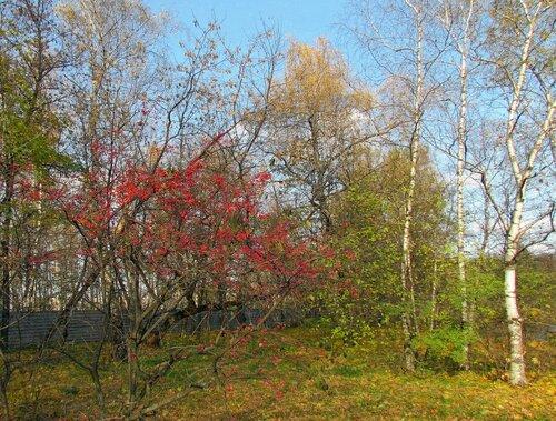 Солнечный день октября