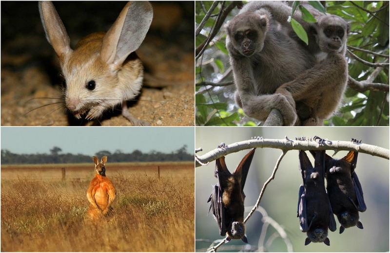 Интересные факты о мире животных