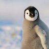 Как живут полярники в Антарктиде - 1