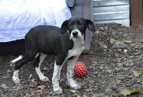 Харрисон собака из приюта догпорт в добрые руки фото