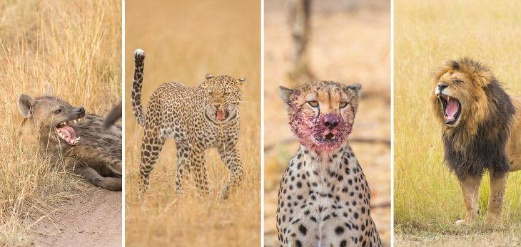 Кто самый сильный в Африке (2 фото)