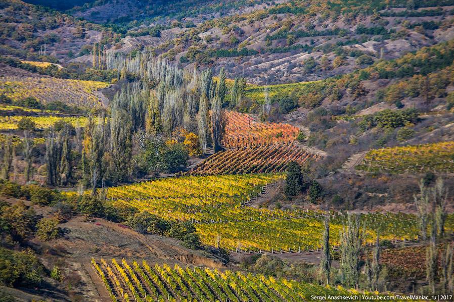 13. А это виноградники уже на ЮБК, недалеко от Алупки. Разницу ощущаете?)