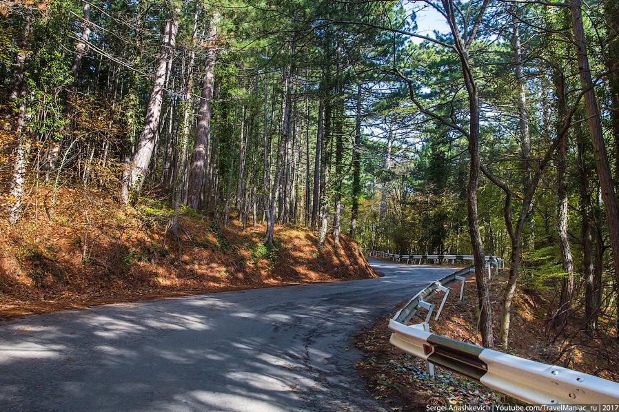 21. Буквально через километр-два. Сосны сменили лиственные деревья, но листвы на них еще достаточно.