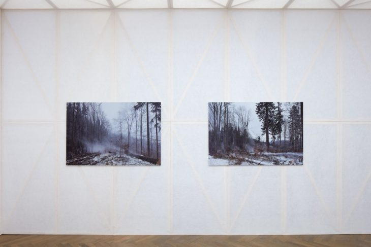 Making of a Forest Exhibition