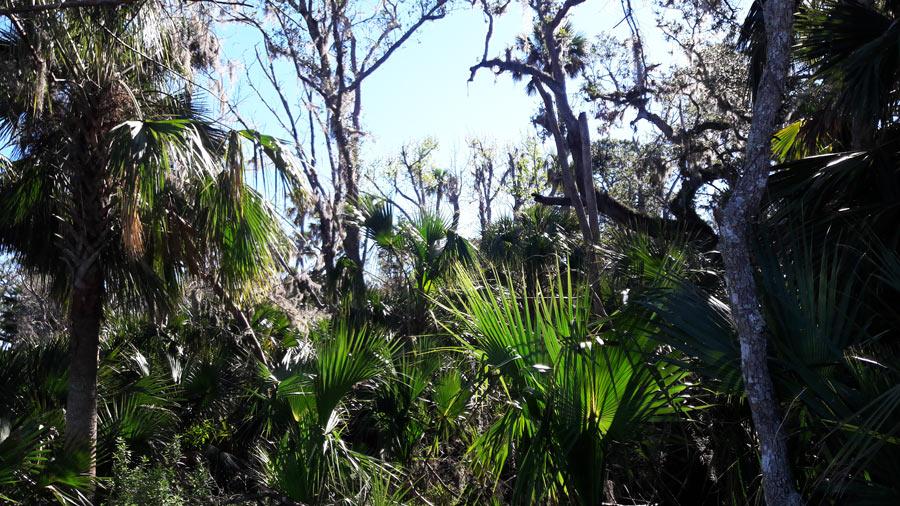 Пальмы. Флорида